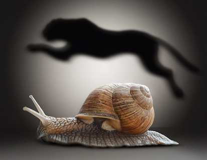 Image of a Snail with cheetah shadow