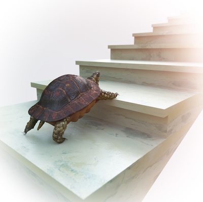 Image of a turtle climbing steps