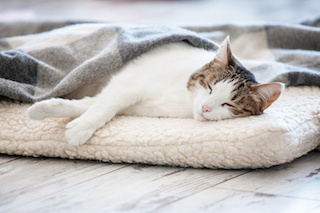 Image of cat sleeping on a cushion with a blanket over half its body